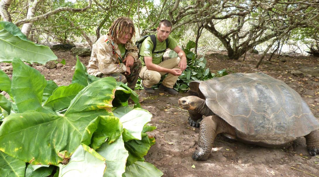 Tortoises get fed as part of conservation efforts in Ecuador.